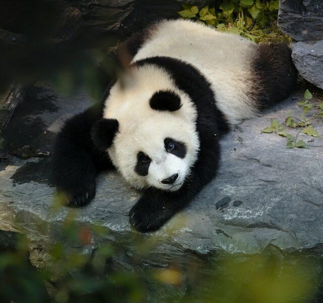 Pandas Tutorial: Mengenal Pandas - pesonainformatika.com